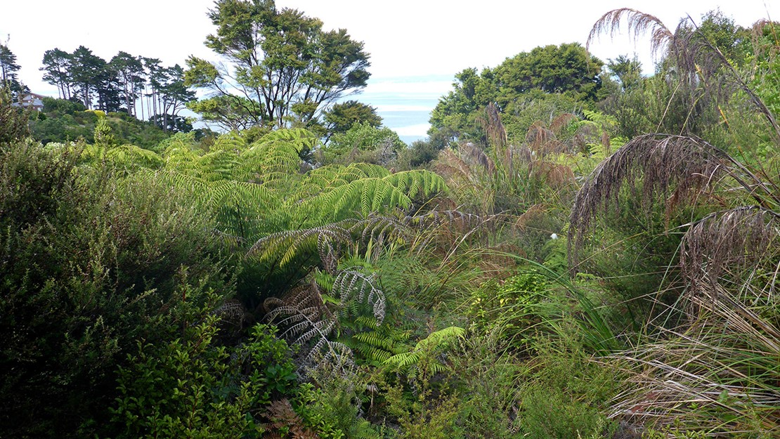 Plant community at Manukau Domain.