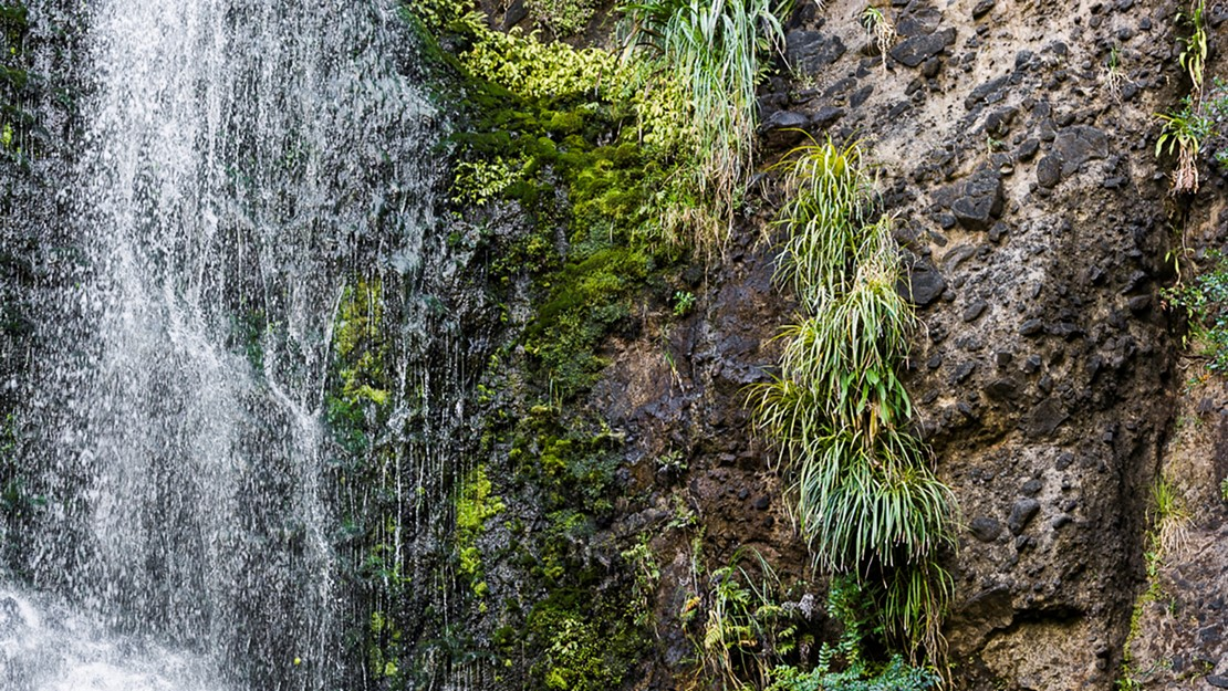 Rockface with small plants and mosses growing in crevaces and ledges alongisde a waterfall.
