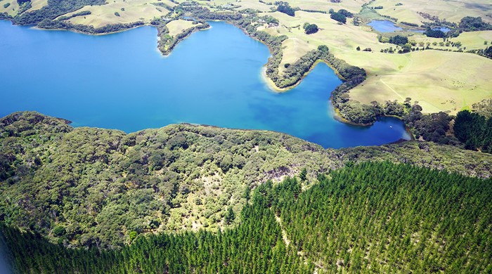 Working farm of Lake Rototoa – Te Rau Pūriri BFA.